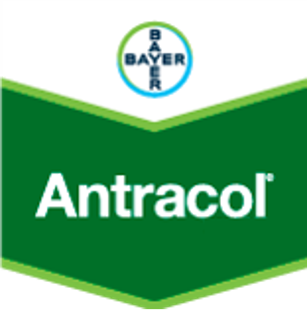 Antracol Bayer